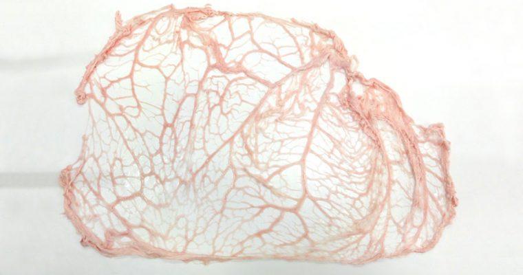 Mutton net-fat