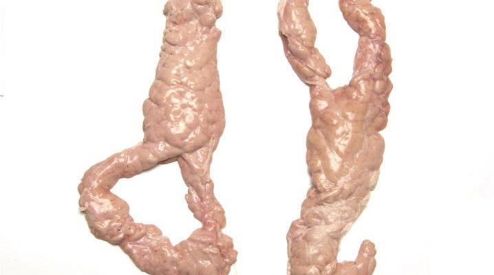 PORK pancreas
